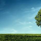 tree-wind-landscape-wallpaper-2560x1440